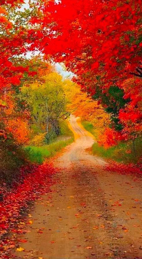 nature, autumn, leaf, vegetation, deciduous,