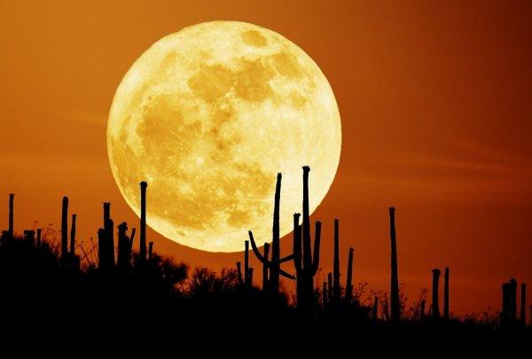 The Biggest Moon