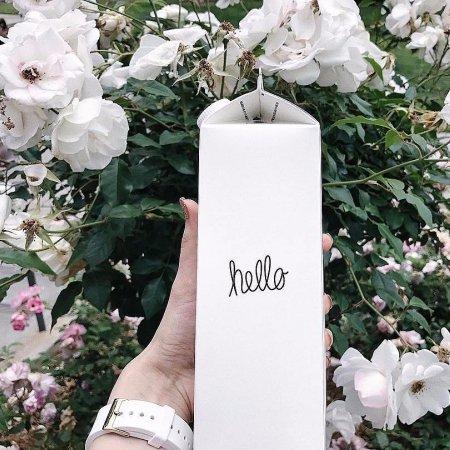 flower, plant, flora, botany, rose,