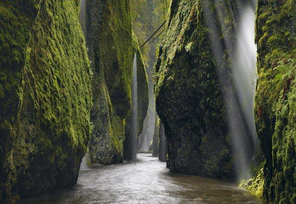 habitat, waterfall, nature, tree, green,