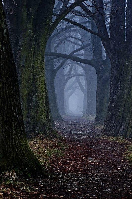 The Dark Forest Path