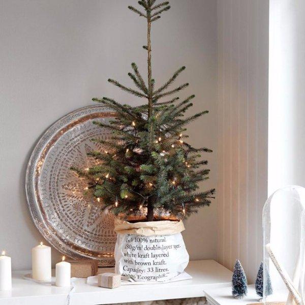 christmas tree, tree, christmas decoration, lighting, branch,