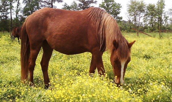 Horse Fat