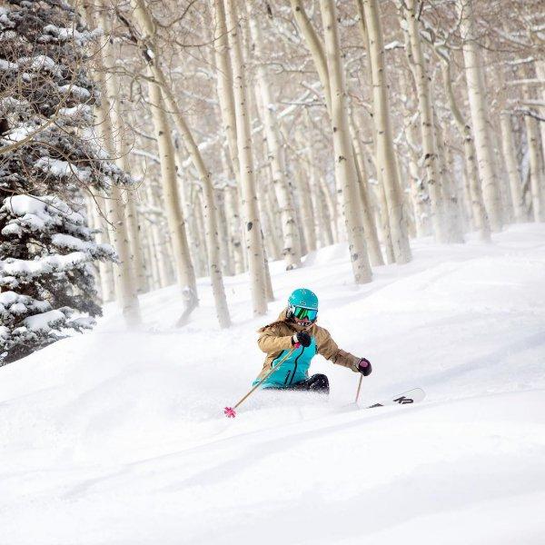 skiing, ski, ski pole, snow, tree,