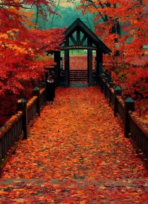 nature, autumn, red, leaf, deciduous,