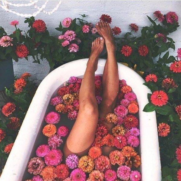 flower, plant, petal, pattern, leg,