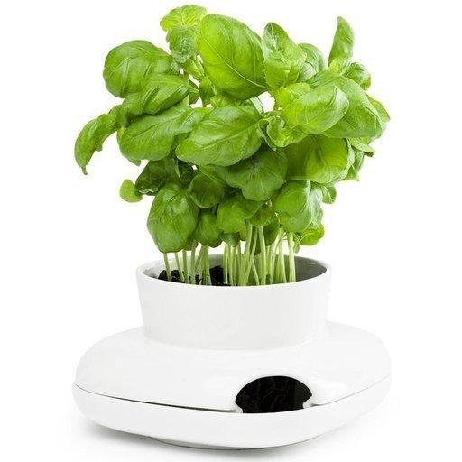 Stoneware Herb Pot