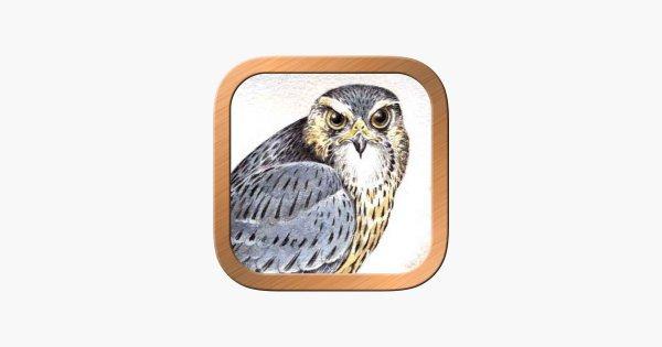 owl, bird of prey, bird, beak, product,