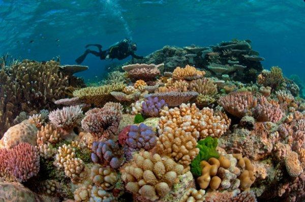 coral reef,habitat,reef,marine biology,coral reef fish,