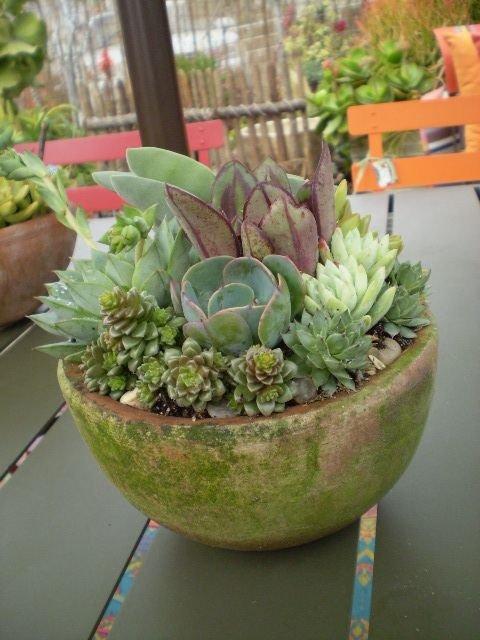 plant,flower arranging,flower,flora,floristry,