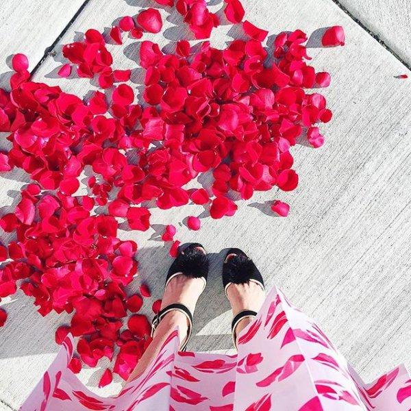 red, pink, flower, flower bouquet, plant,