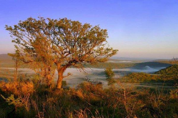 Swaziland – 69.0%