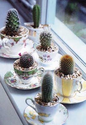 plant,food,cactus,land plant,flower,