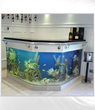 freshwater aquarium,aquarium lighting,aquarium,