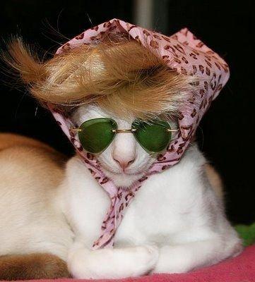 Haute CAT-ture