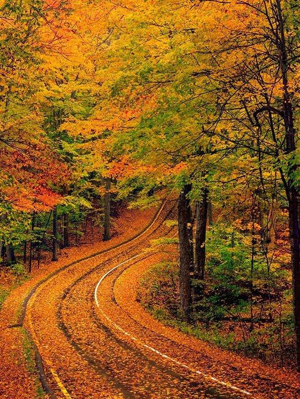 nature, autumn, leaf, woodland, path,
