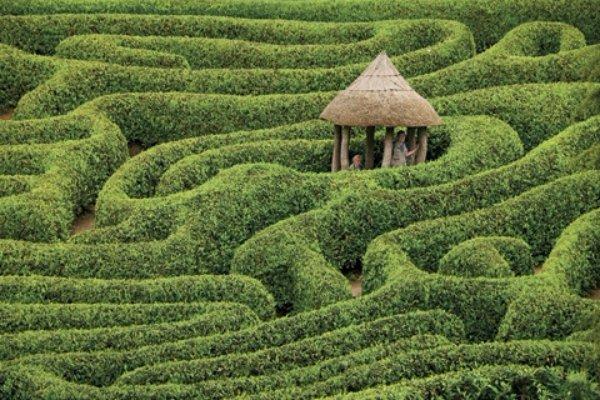 Glendurgan Maze in England