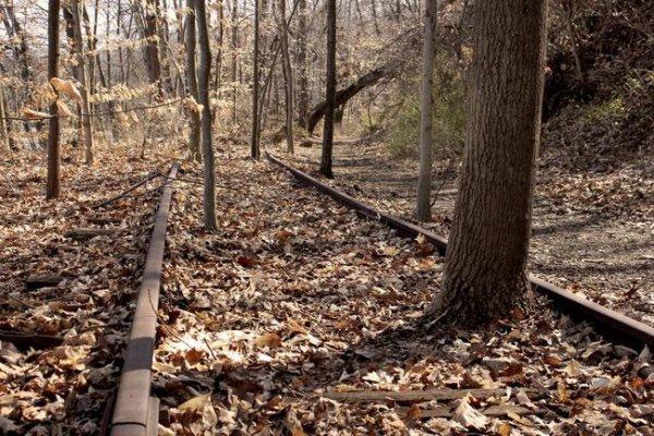 habitat, track, tree, soil, forest,