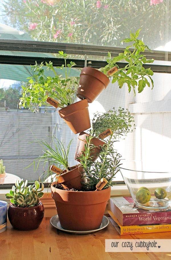 plant,tree,botany,flower,floristry,
