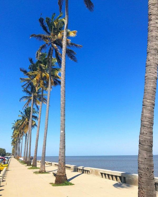 sky, palm tree, arecales, sea, tree,
