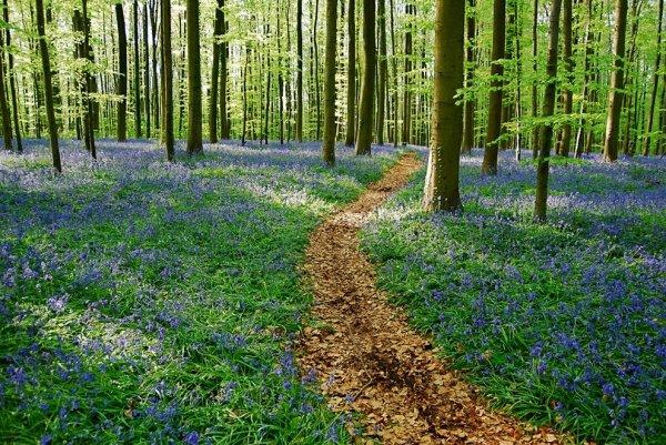 Halle's Wood (Belgium)