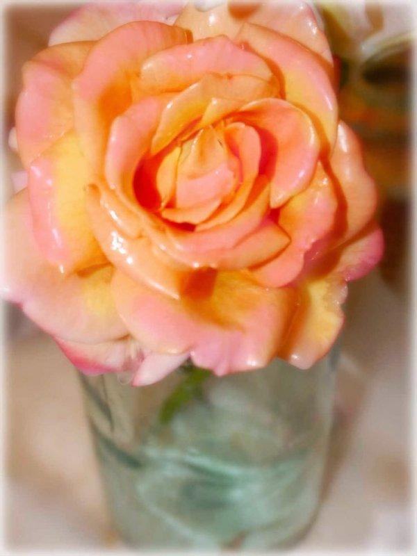Preserve Fresh Blooms in Wax
