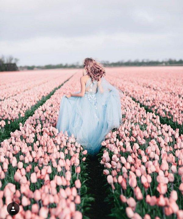 flower, pink, flowering plant, petal, spring,