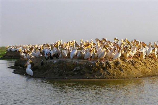 Djoudj National Bird Sanctuary, Senegal