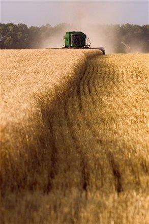 Harvesting a Wheat Field in South Dakota