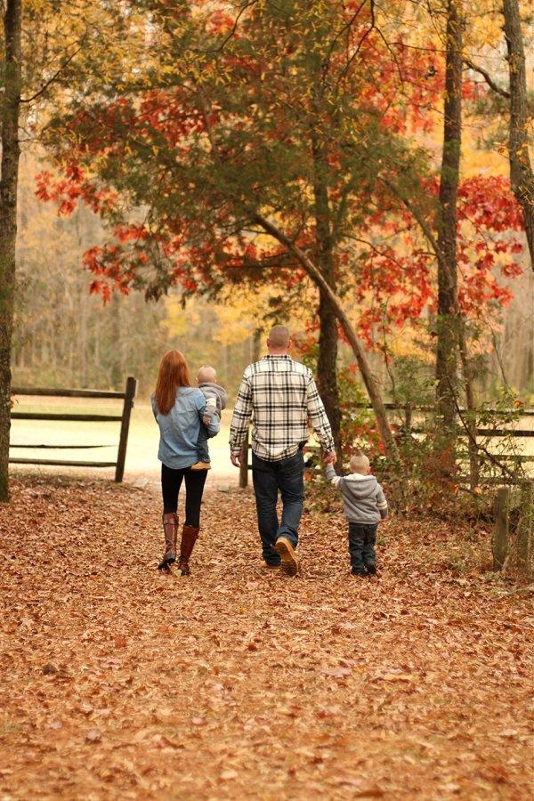 tree,season,autumn,leaf,spring,