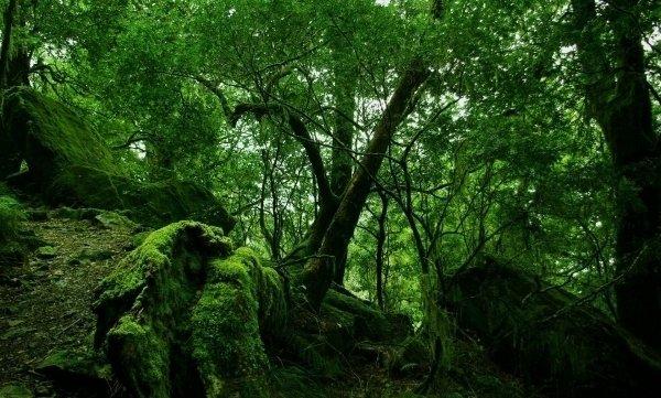 Rainforests Will Make Future Medicines