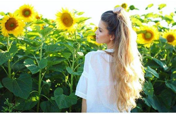 flower, plant, sunflower, yellow, flowering plant,