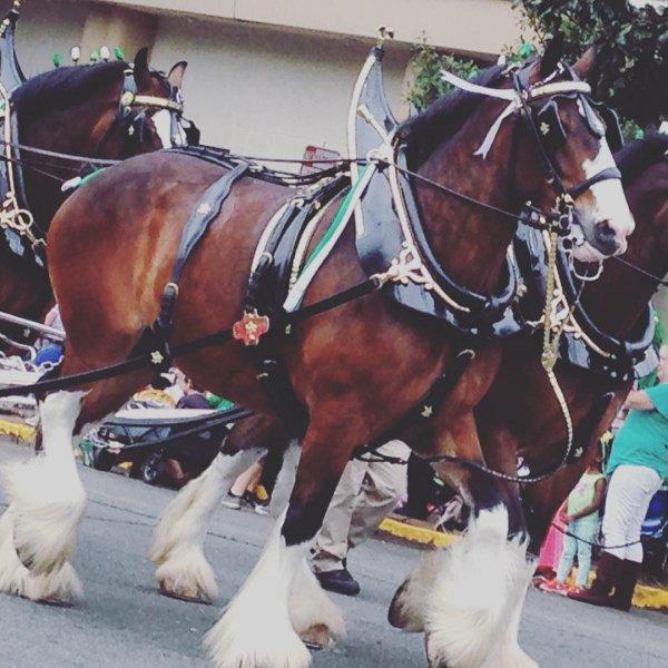 Horse, Horse harness, Horse tack, Bridle, Horse supplies,