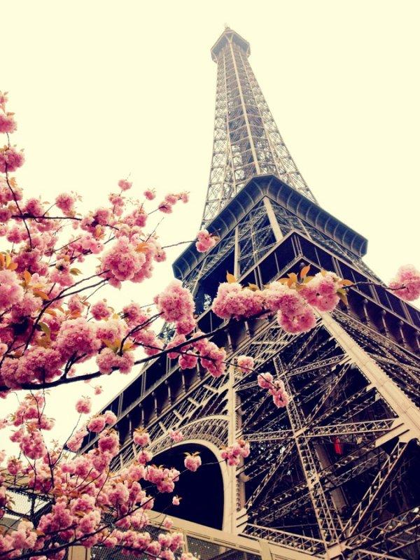 Eiffel Tower,landmark,amusement park,flower,park,