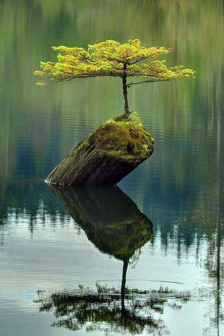 reflection,habitat,nature,tree,water,