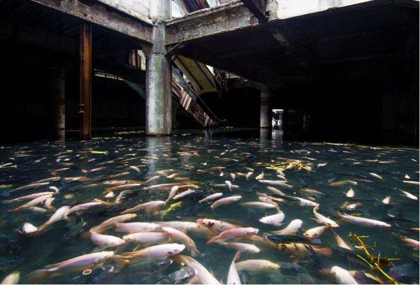 Mall, or Aquarium?