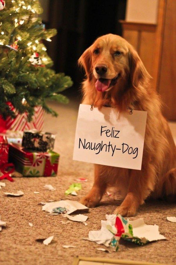 Dog Who Brought Shame upon the Holidays