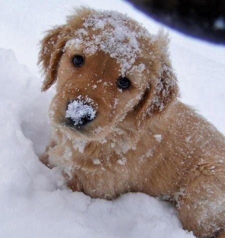 dog,mammal,vertebrate,miniature poodle,dog breed,