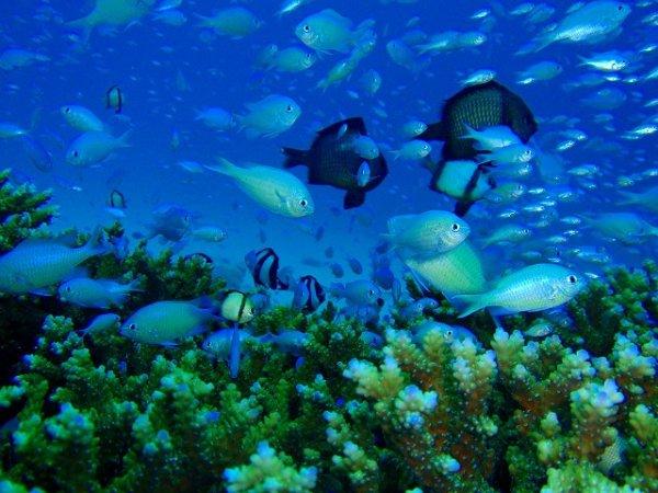 Scuba Dive Japan's Own Atlantis