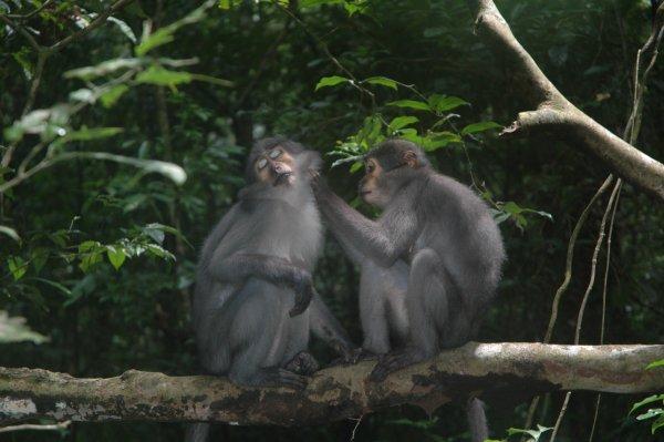 Taï National Park, Côte D'Ivoire