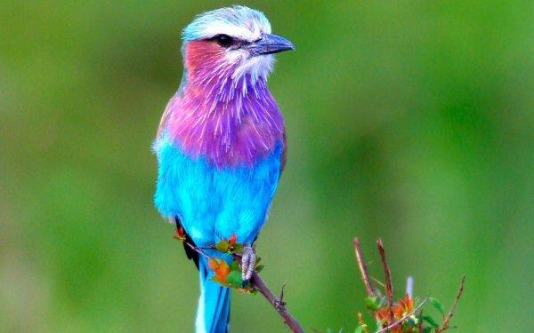bird,vertebrate,beak,fauna,wildlife,