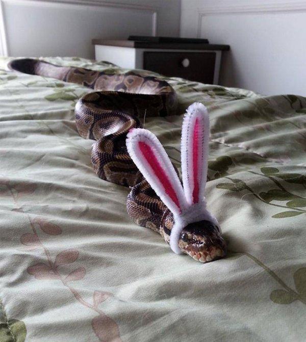 Easter... Snake?