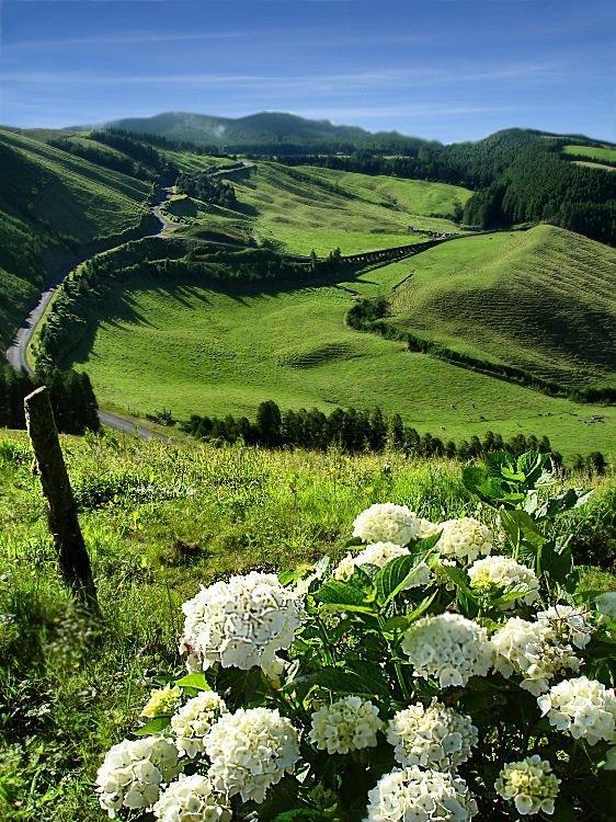 Island Faial, Azores