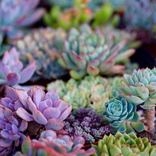 nature, color, pink, plant, flower,
