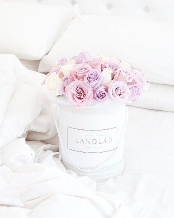pink, white, flower, flower bouquet, petal,