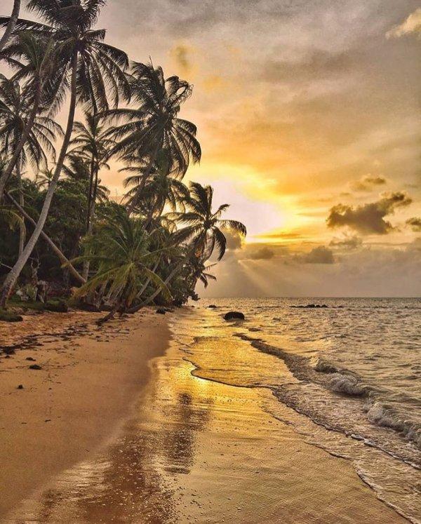 sky, shore, sea, tropics, arecales,