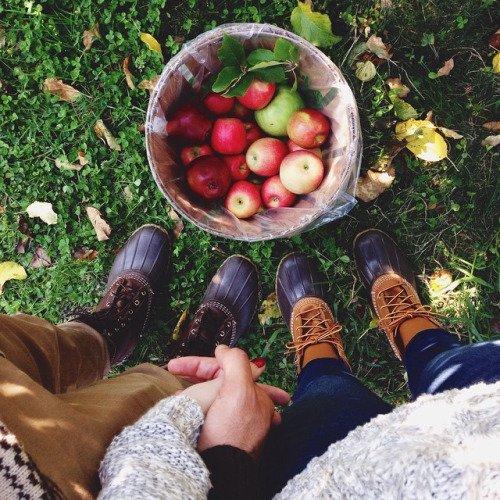 Harvest Apples
