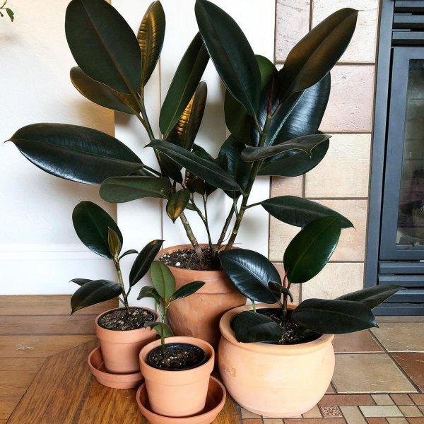 plant, flowerpot, houseplant,