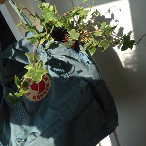 green, flower, plant, floristry, art,