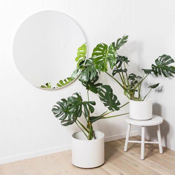 plant, leaf, flowerpot, houseplant, vase,